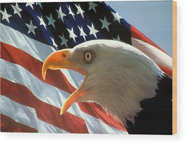 Eagle Wood Print featuring the photograph Live Free Or Die by Carl Purcell