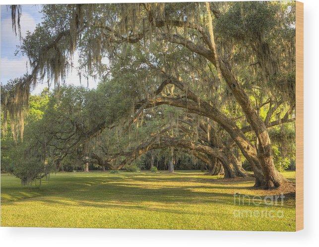 Magnolia Plantation Wood Print featuring the photograph Live Oak Trees Sunrise by Dustin K Ryan