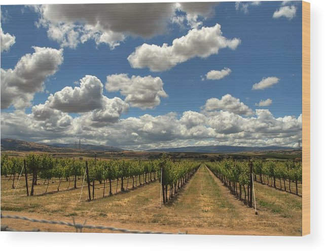 Vineyard Wood Print featuring the photograph Livermore Vineyard by Douglas Shier