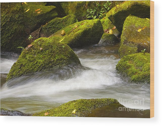Living Wood Print featuring the photograph Living Waters by Neil Doren