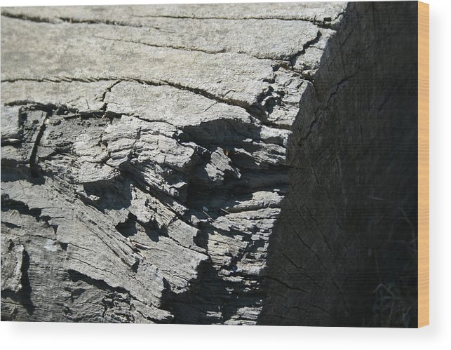 Log Wood Print featuring the photograph Log Side by Joshua Sunday