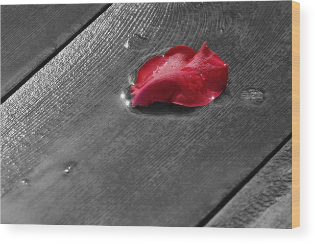 Rose Wood Print featuring the digital art Lonely Petal by Marrissia Ruth