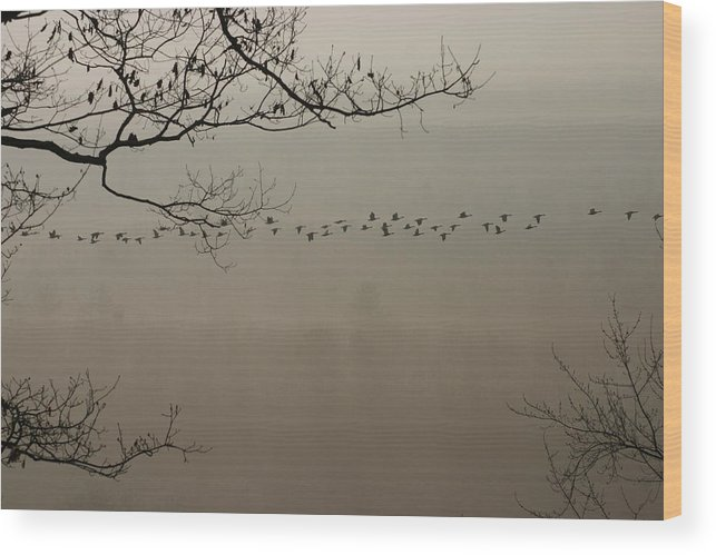 Flying Geese Wood Print featuring the photograph Long Flight by Kevin Dunham
