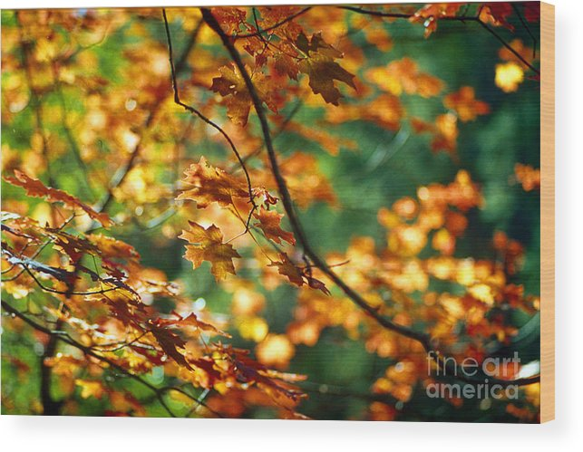 Fall Color Wood Print featuring the photograph Lost In Leaves by Kathy McClure