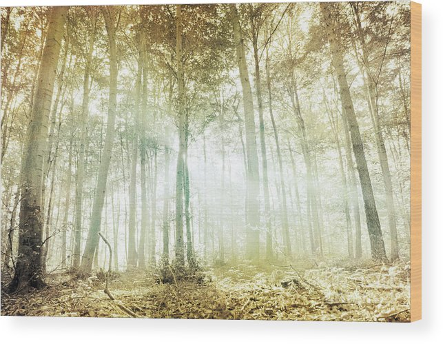 Woodland Photograph Wood Print featuring the photograph Angelic by Violet Gray