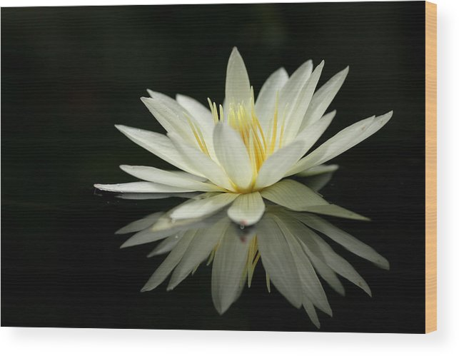 Lotus Wood Print featuring the photograph Lotus And Reflection by Angie Bechanan