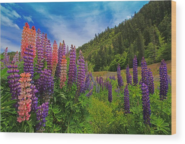 Landscape Wood Print featuring the photograph Lupine by Lee Amerson