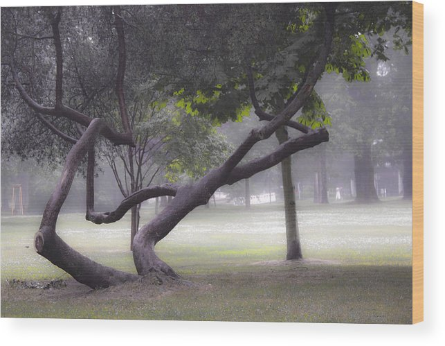 Forest Wood Print featuring the photograph Magic Forest by Hans English