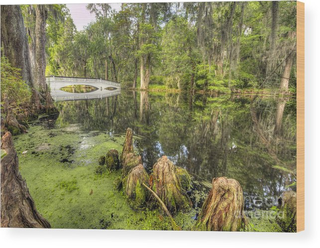 Magnolia Plantation Gardens Wood Print featuring the photograph Magnolia Plantation Cypress Garden by Dustin K Ryan