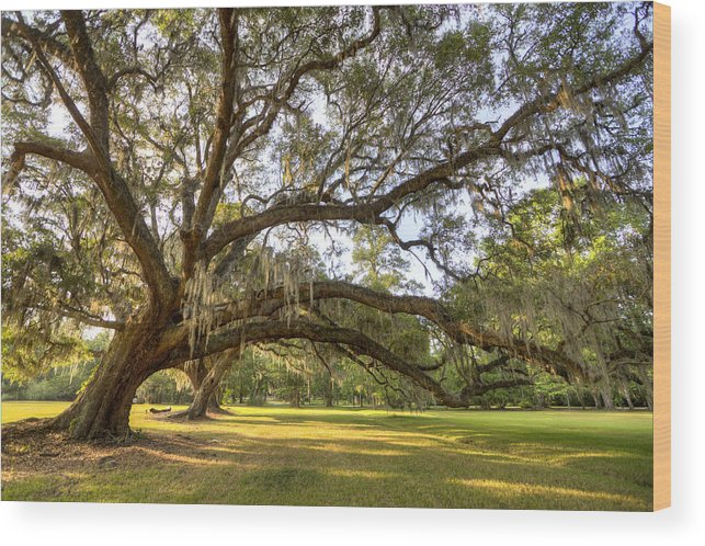 Magnolia Plantation Wood Print featuring the photograph Magnolia Plantation Live Oak Sunrise by Dustin K Ryan