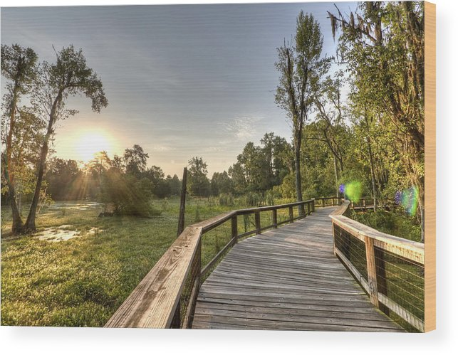 Magnolia Plantation Wood Print featuring the photograph Magnolia Swamp Sunrise by Dustin K Ryan