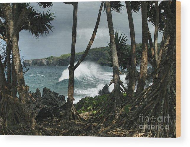 Aloha Wood Print featuring the photograph Mahama Lauhala Keanae Peninsula Maui Hawaii by Sharon Mau