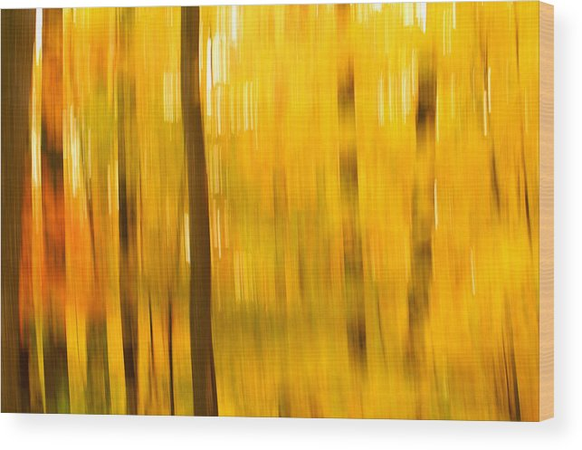 Abstract Photo Wood Print featuring the photograph Maple Magic by Bill Morgenstern