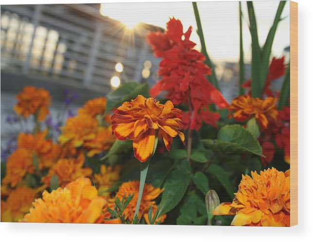 Marigold Wood Print featuring the photograph Marigold Sunshine by Joshua Sunday