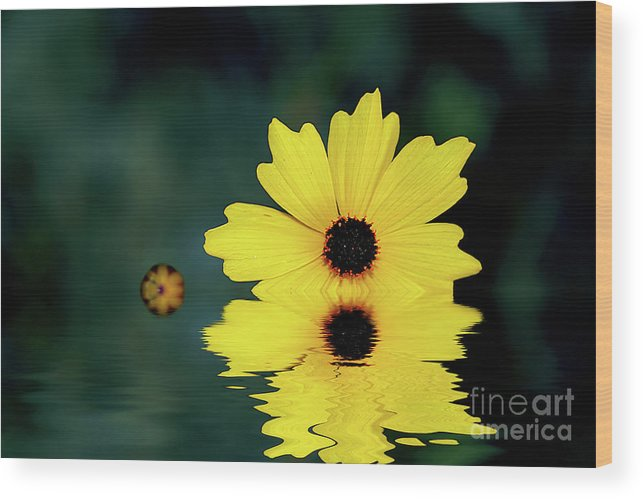 Adrian Laroque Wood Print featuring the photograph Mellow Yellow by LR Photography