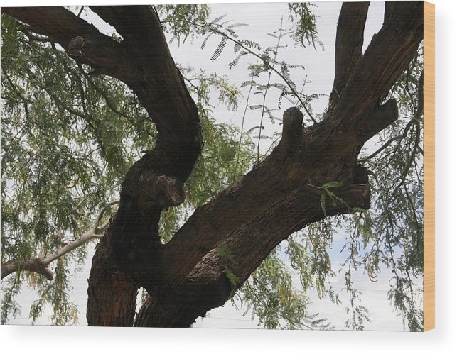 Mesquite Wood Print featuring the photograph Mesquite Tree by Bob Gardner