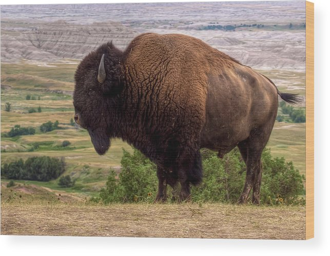 Animalia Wood Print featuring the photograph Mighty Bison by Bill Lindsay