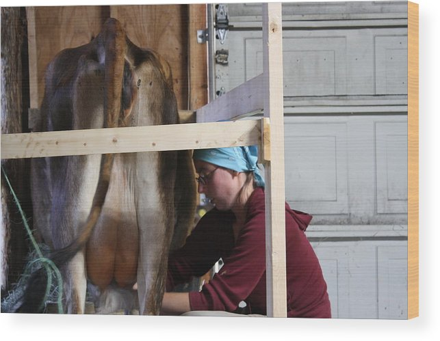 Milking Cow Wood Print featuring the photograph Milking Time by Rachael Bliss