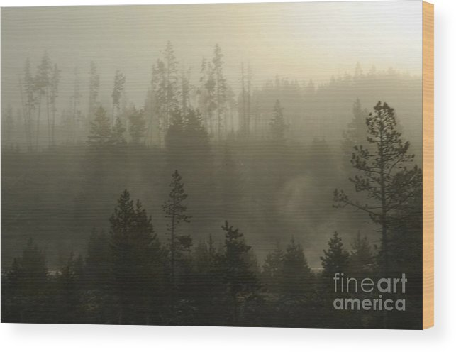 Fog Wood Print featuring the photograph Misty Morning by Dennis Hammer
