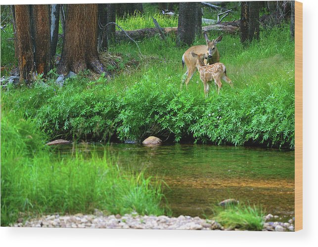 Deer Wood Print featuring the photograph Mom And Baby Deer by Surjanto Suradji