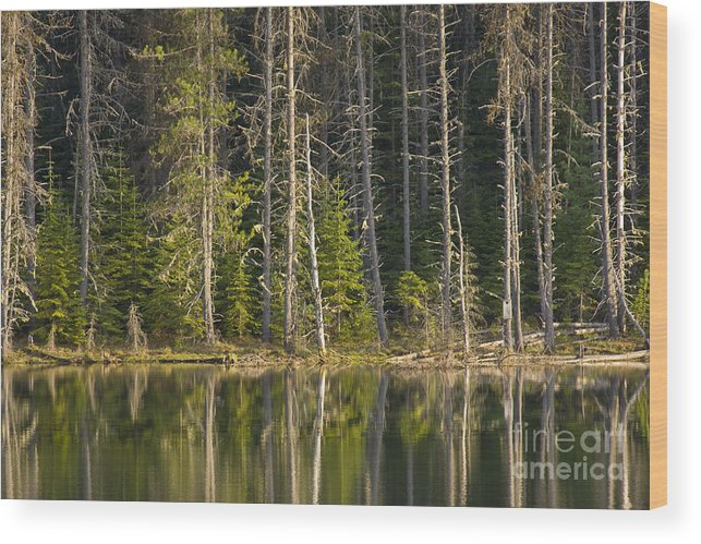 Trees Wood Print featuring the photograph Moose Creek Reservoir by Idaho Scenic Images Linda Lantzy