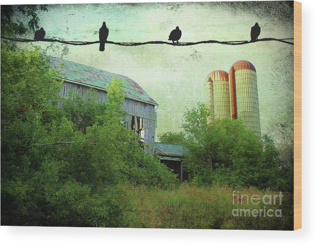 Morning Doves Wood Print featuring the photograph Morning Doves by Anthony Djordjevic