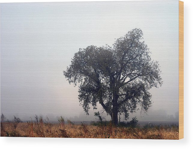 Fog Wood Print featuring the photograph Morning Fog - The Delta by D'Arcy Evans