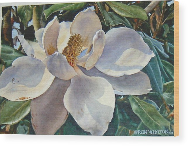 Flower Wood Print featuring the painting Morning Magnolia by Marion Hylton