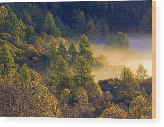 Scotland Wood Print featuring the photograph Morning Mist In The Trossachs by John McKinlay