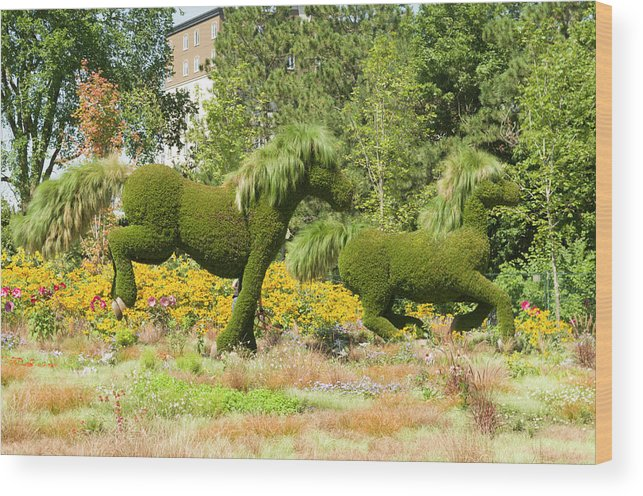150 Wood Print featuring the photograph Mosaicanada 150 Display Of Horses 2 by Bob Corson
