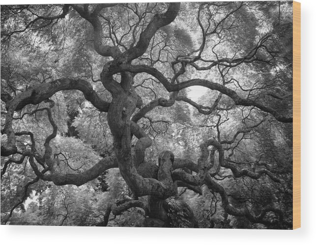 Tree Wood Print featuring the photograph Motivations by Mitch Cat