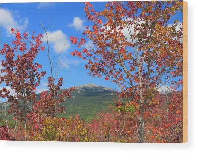 Red Maple Wood Print featuring the photograph Mount Monadnock Red Maple Foliage by John Burk