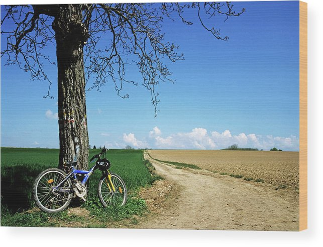 Absence Wood Print featuring the photograph Mountain Bike Under A Tree Beside Dirt Road by Sami Sarkis