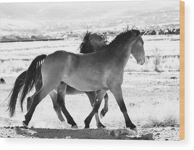 Mustangs Wood Print featuring the photograph Mustangs by Sagittarius Viking