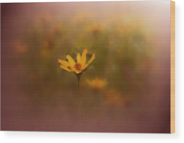 Nature Wood Print featuring the photograph Nature by Linda Sannuti