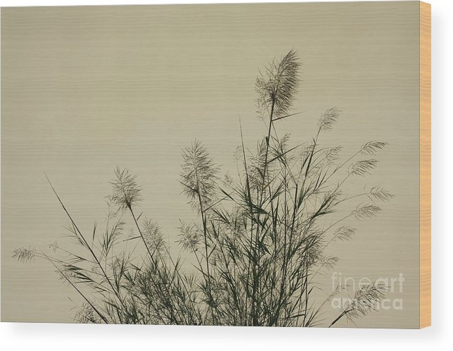 Nature Wood Print featuring the photograph Nature Scenery In Lijiang China by Julia Hiebaum