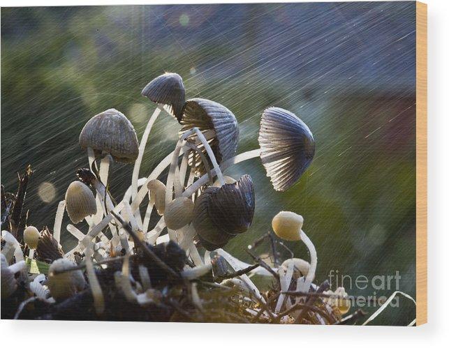 Mushrooms Rain Showers Umbrellas Nature Fungi Wood Print featuring the photograph Nature by Sheila Smart Fine Art Photography