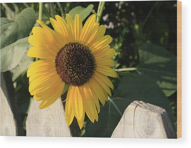 Flowers Wood Print featuring the photograph Neighborly Advance by Alan Rutherford