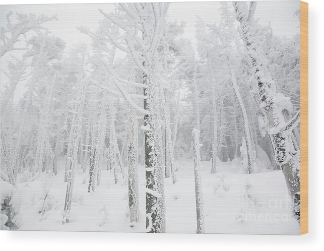 Snow Covered Wood Print featuring the photograph New England - Snow Covered Forest by Erin Paul Donovan