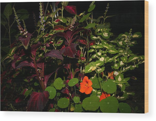 Flower's Wood Print featuring the photograph Night Flower's by Kevin Dunham