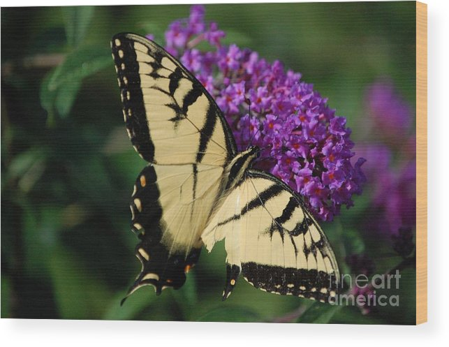Butterfly Wood Print featuring the photograph Nothing Is Perfect by Debbi Granruth