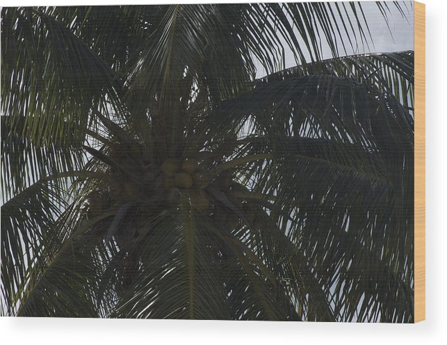 Palms Wood Print featuring the photograph Nuts Over Coconuts by Bonnes Eyes Fine Art Photography