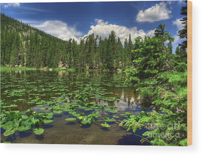 Landscape Wood Print featuring the photograph Nymph Lake by Pete Hellmann