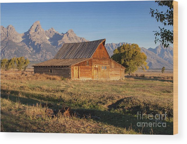 Jackson Hole Wood Print featuring the photograph Old Mormon Farm by Bob Phillips