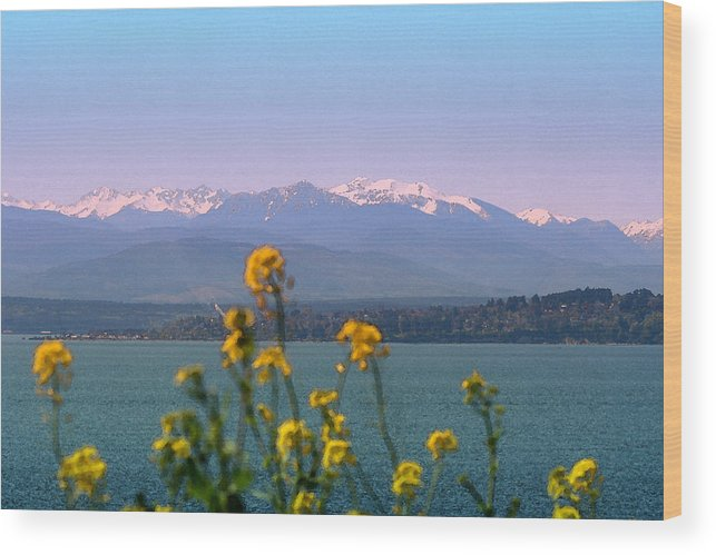 Olympics Wood Print featuring the photograph Olympic Mtn. M1001 by Mary Gaines