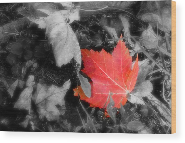 Leaf Wood Print featuring the photograph One Of A Kind by Kenneth Krolikowski