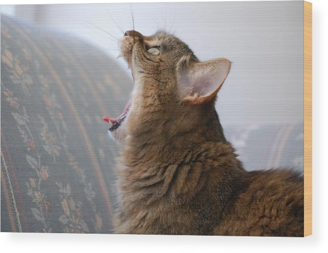 Cat Wood Print featuring the photograph Open Wide by Jennifer Englehardt