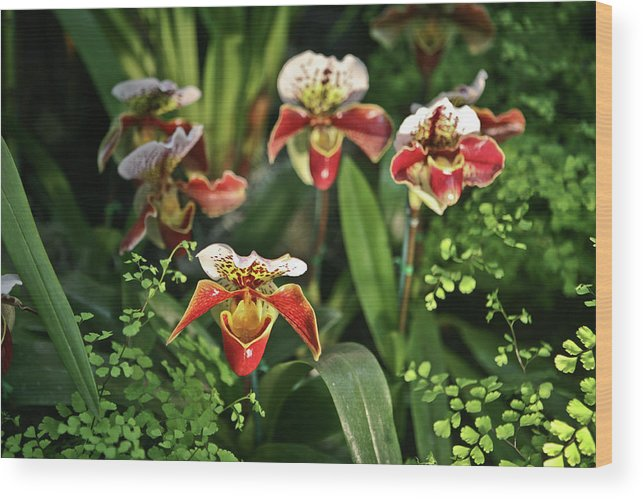 Orchids Wood Print featuring the photograph Orange White Orchid by Liz Santie