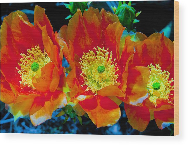 Orange Wood Print featuring the photograph Orange3 by Joanne Gallery