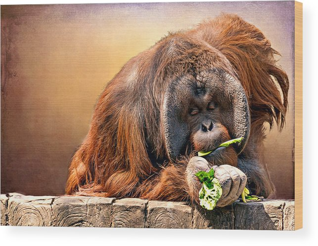 Animal Wood Print featuring the photograph Orangutan by Maria Coulson